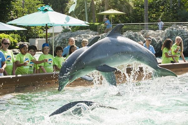 2015 SeaWorld summer camp