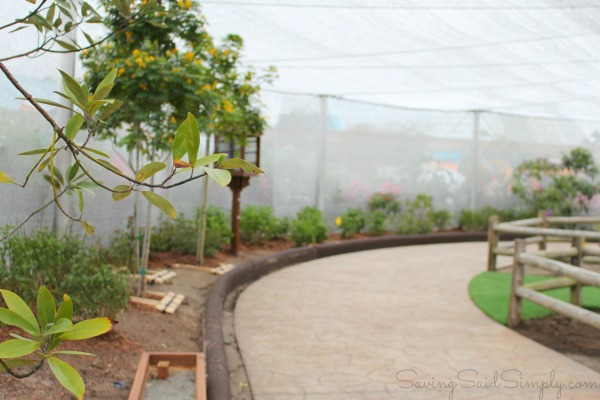 Epcot butterfly garden