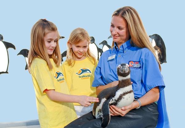 SeaWorld summer camp details