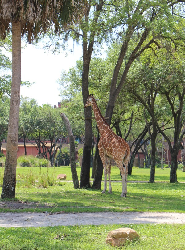 Animal kingdom lodge facts
