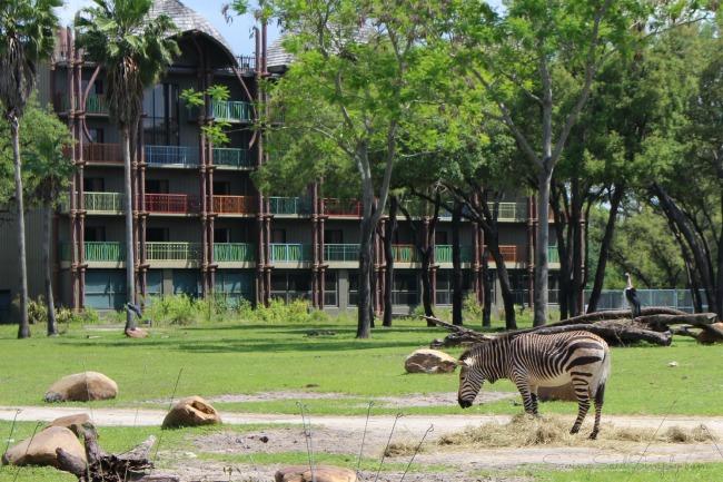 Animals at animal kingdom lodge