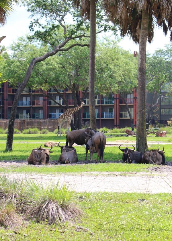 Disney animal kingdom lodge animals