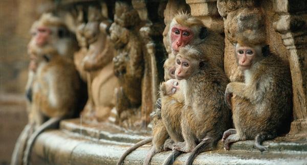 Disneynature monkey kingdom movie review