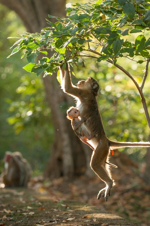 Monkey kingdom review for kids