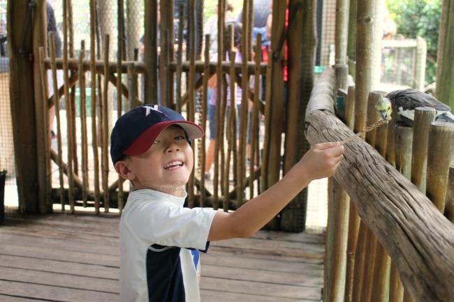 Brevard zoo aviary