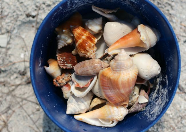 Sanibel island Florida shelling