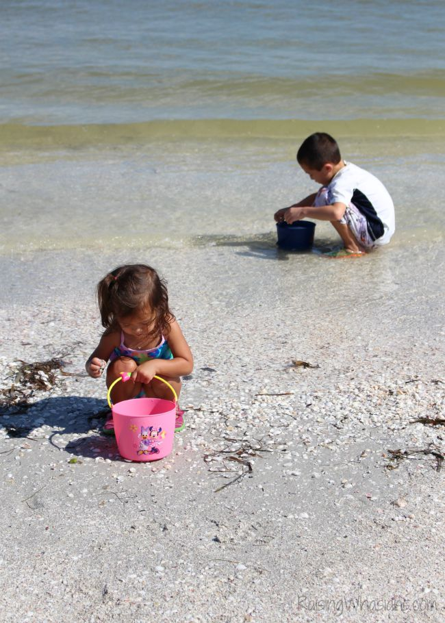 Shelling Sanibel island families