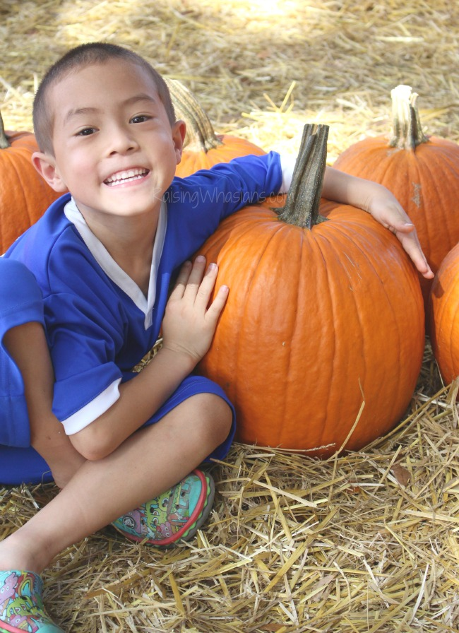 Pumpkin patch for family