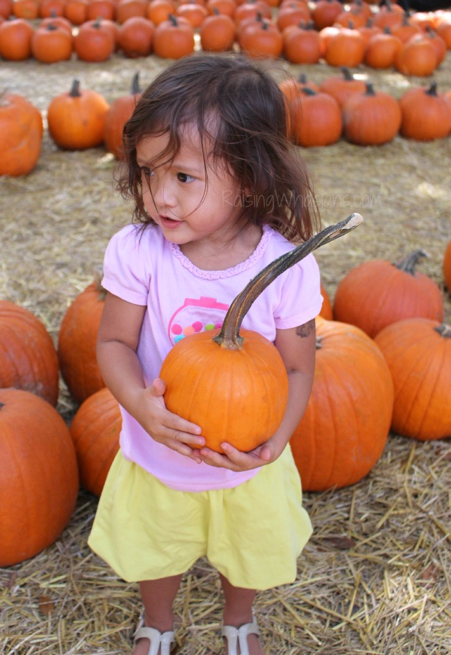 Pumpkin patch tips for families