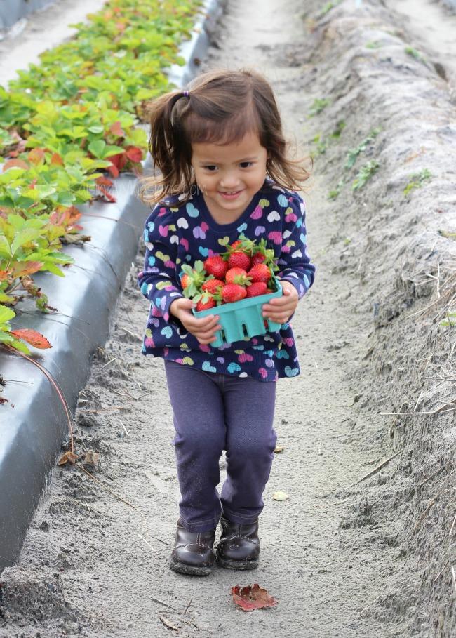 Strawberries kids humor