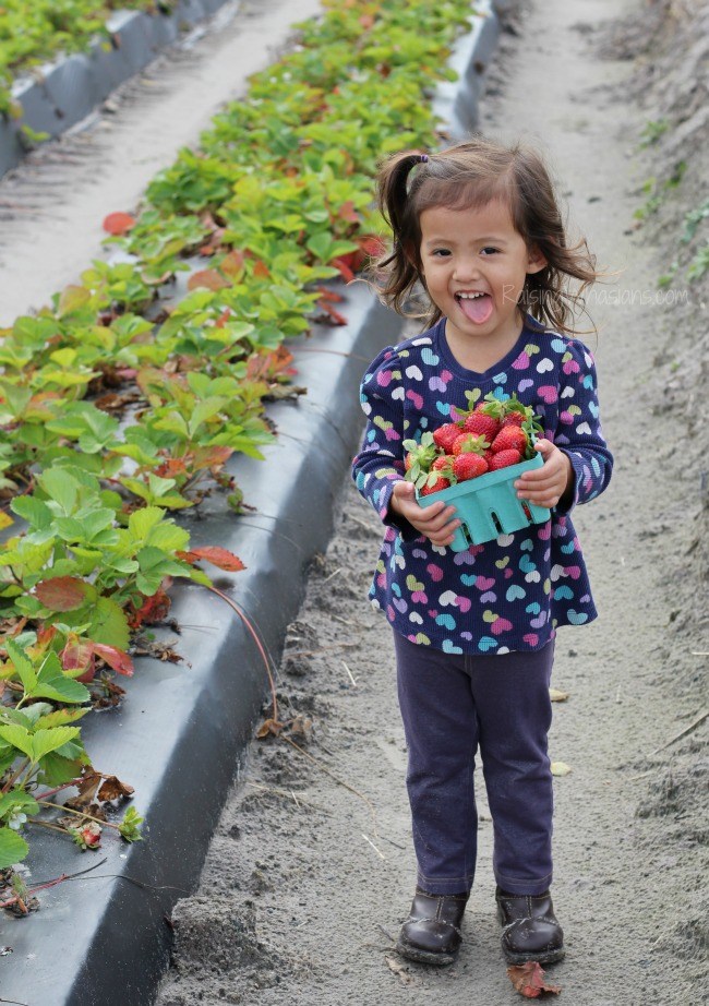 Strawberry picking with toddler