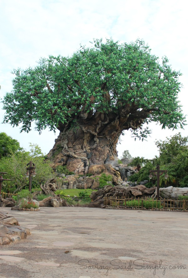 How to get perfect Disney tree of life picture