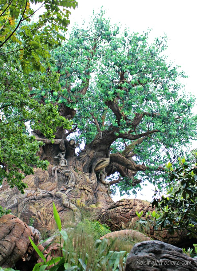 Tree of life animal kingdom photography