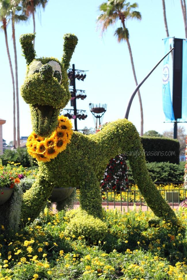 2016 flower and garden festival