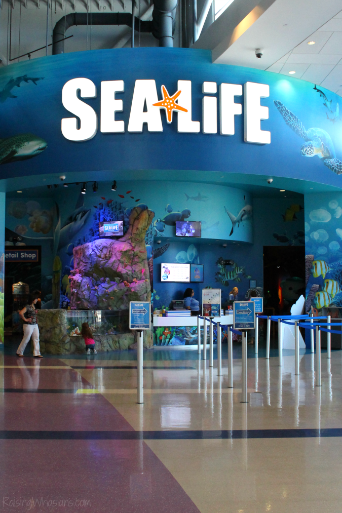 Orlando aquarium review