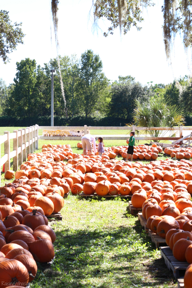 Outtake pumpkin patch photos for the win