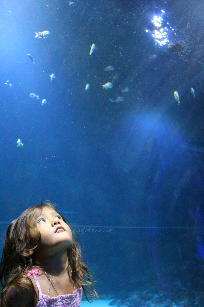 Why Your Family Should Visit Sea Life Orlando Aquarium Raising Whasians