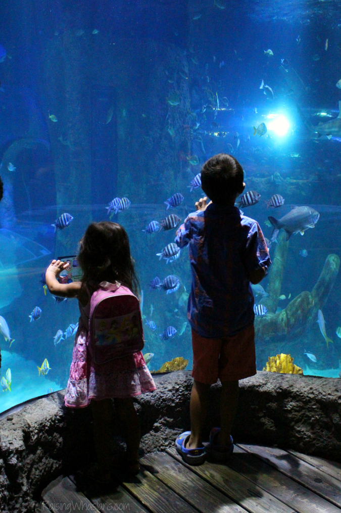 Sea life Orlando review for families