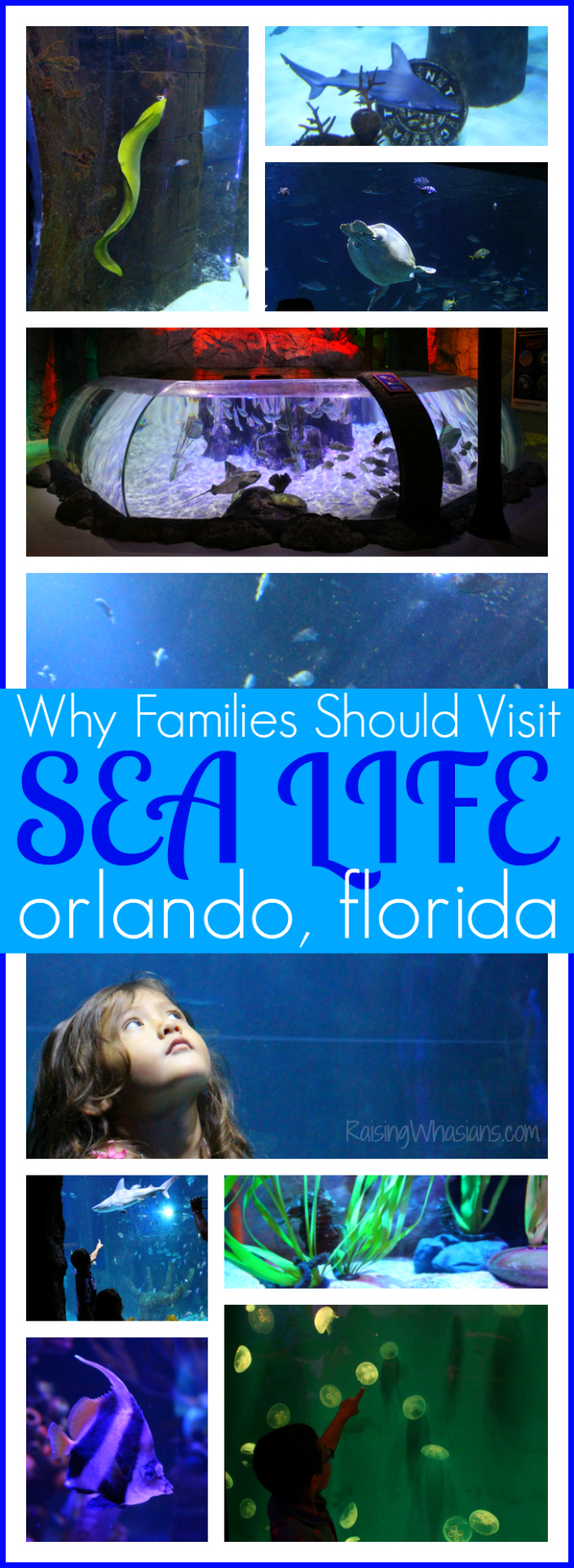 Why your family should visit sea life Orlando aquarium