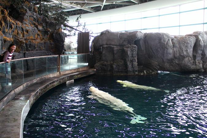 Shedd aquarium tips