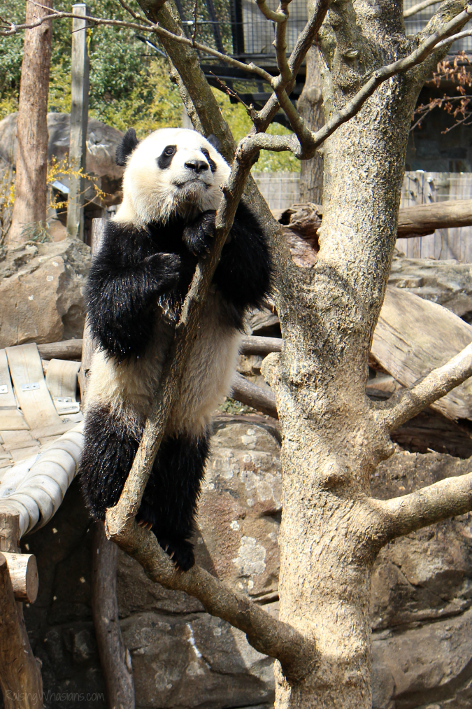 National zoo tips for families
