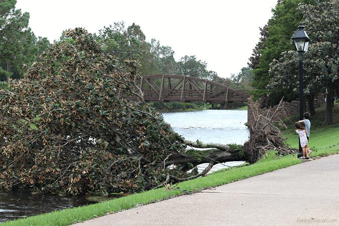 Hurricane damage Disney hotel
